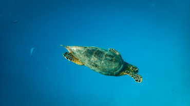 sea turtle protection